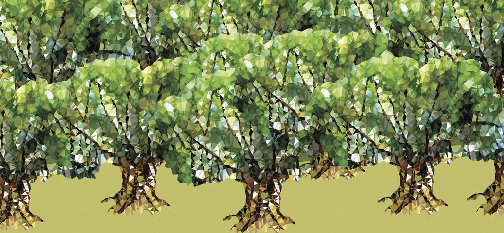 El poder transformador del emprendimiento social. Lecciones de 100,000 olivos centenarios y de 20 artesanas pantalleras